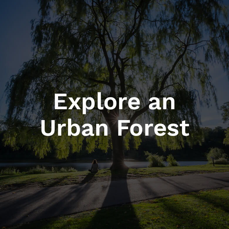 Explore an Urban Forest 2018